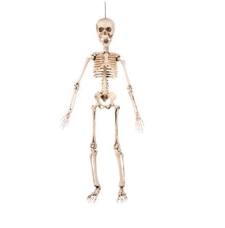 Prop, skelett 50 cm