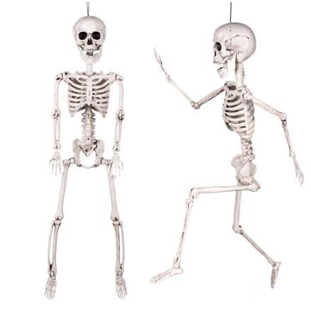 Prop, skelett 60 cm