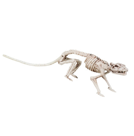 Prop, skelett råtta 35 cm