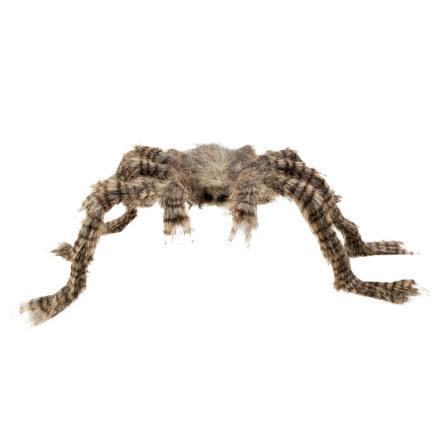Hårig spindel, 70x50 cm